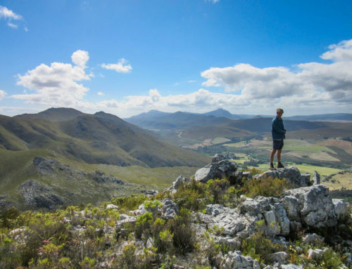 WE MADE IT! – Interview with Phillipskop Mountain Reserve